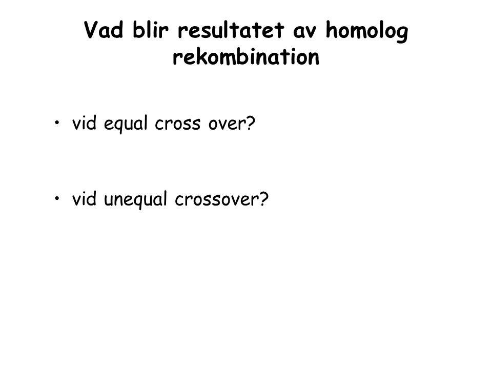 Vad blir resultatet av homolog rekombination