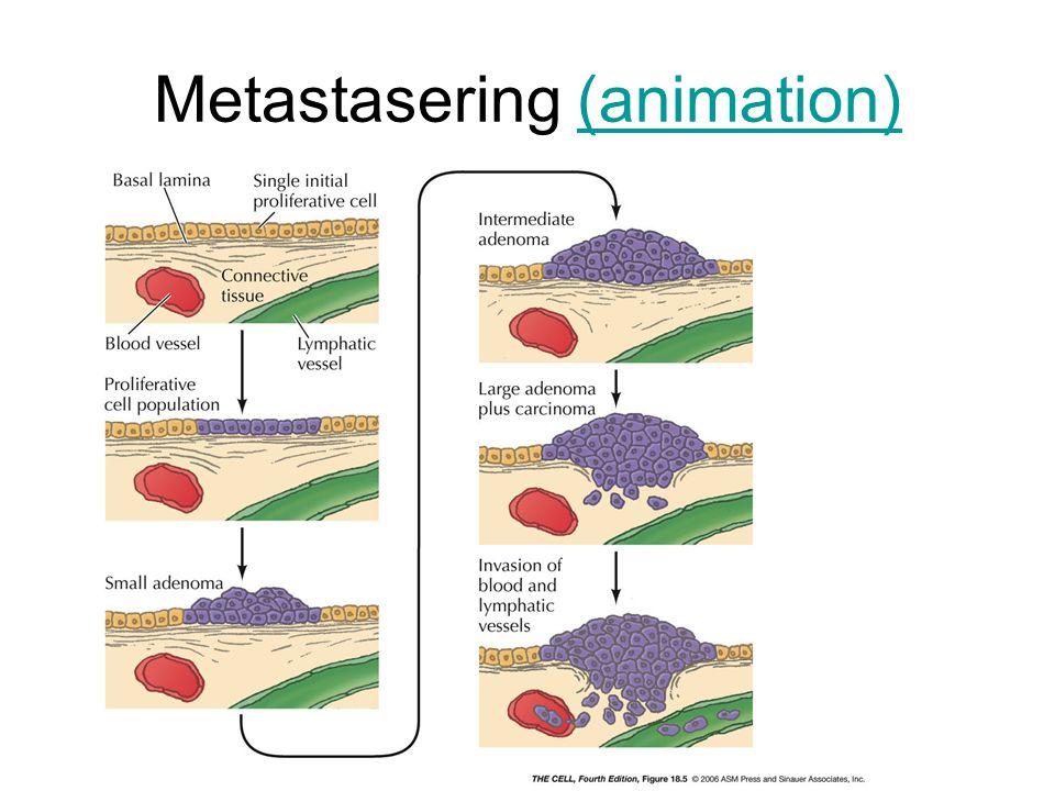 Metastasering (animation)