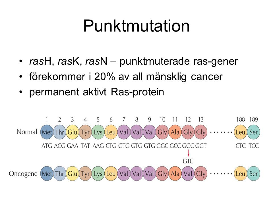 Punktmutation rasH, rasK, rasN – punktmuterade ras-gener