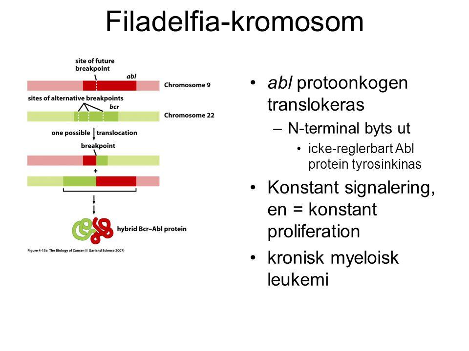 Filadelfia-kromosom abl protoonkogen translokeras