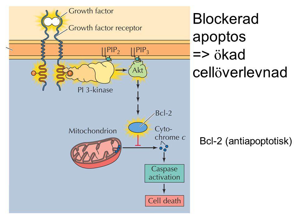 Blockerad apoptos => ökad cellöverlevnad