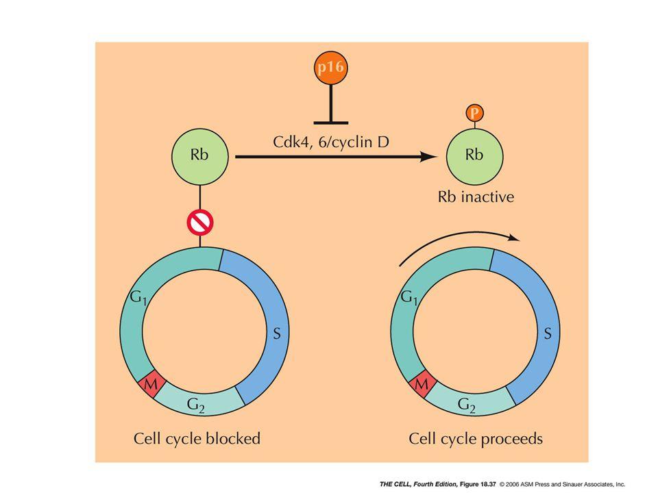 cell4e-fig-18-37-0.jpg