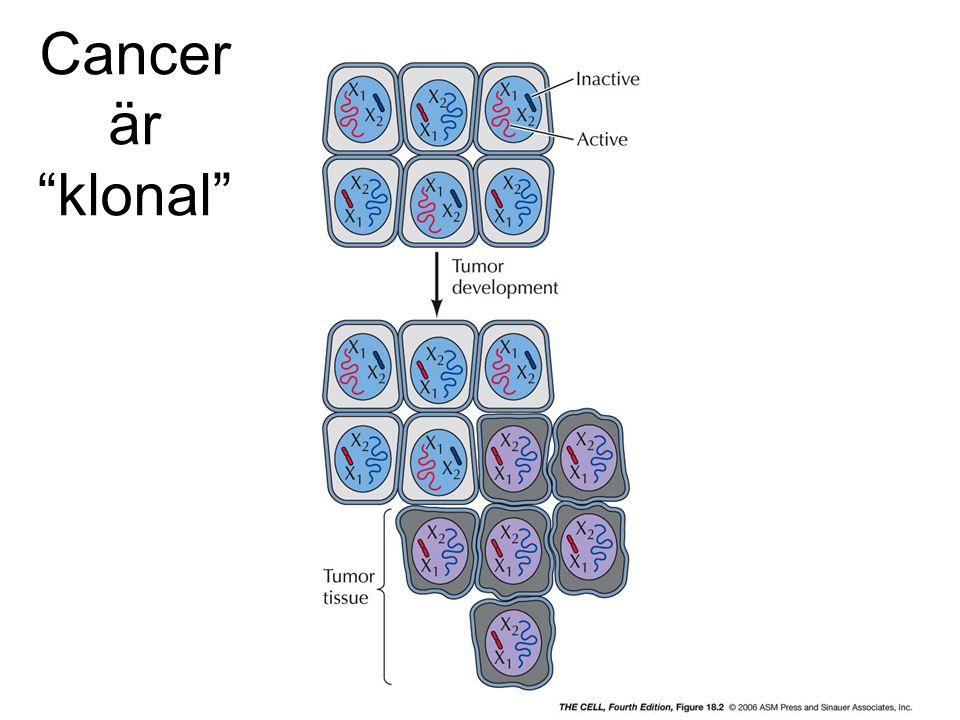 Cancer är klonal cell4e-fig-18-02-0.jpg