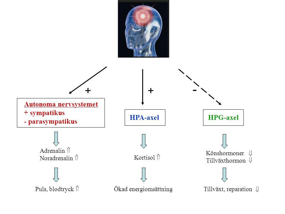 - + + Autonoma nervsystemet + sympatikus - parasympatikus HPA-axel