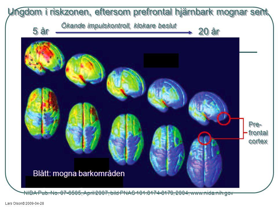 Ungdom i riskzonen, eftersom prefrontal hjärnbark mognar sent