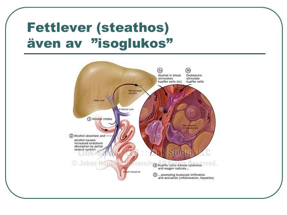 Fettlever (steathos) även av isoglukos