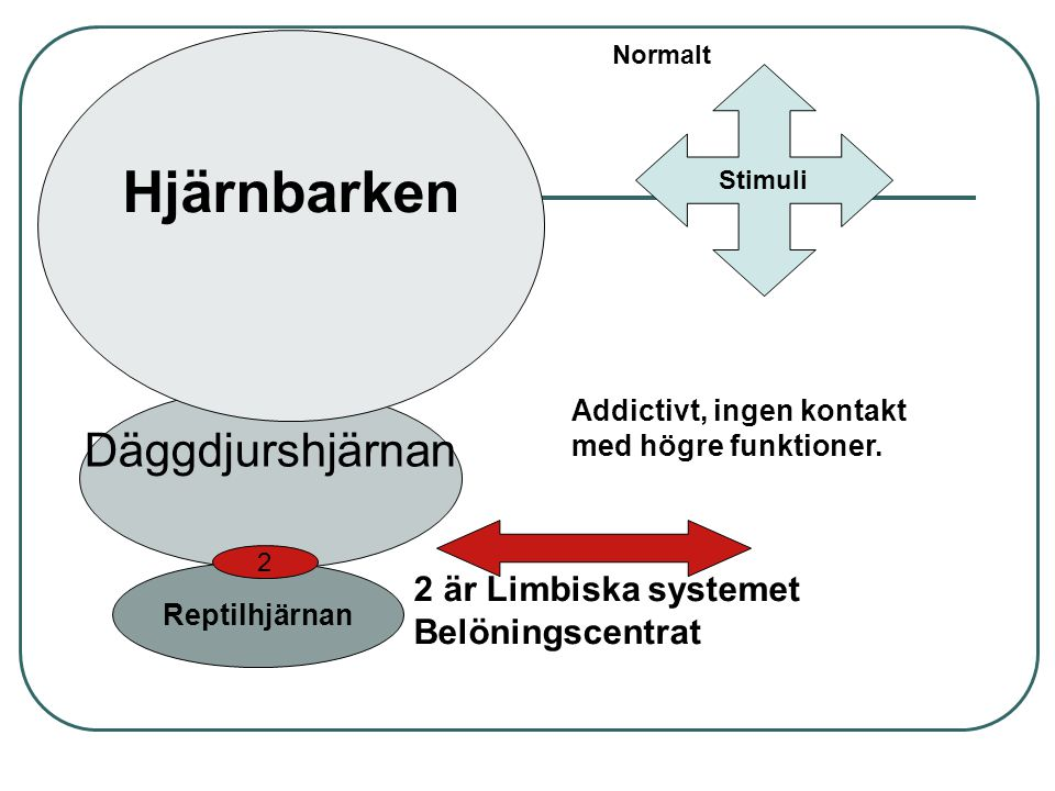 Hjärnbarken Däggdjurshjärnan 2 är Limbiska systemet Belöningscentrat