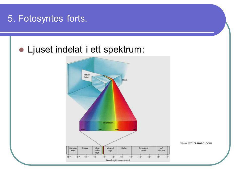 Ljuset indelat i ett spektrum: