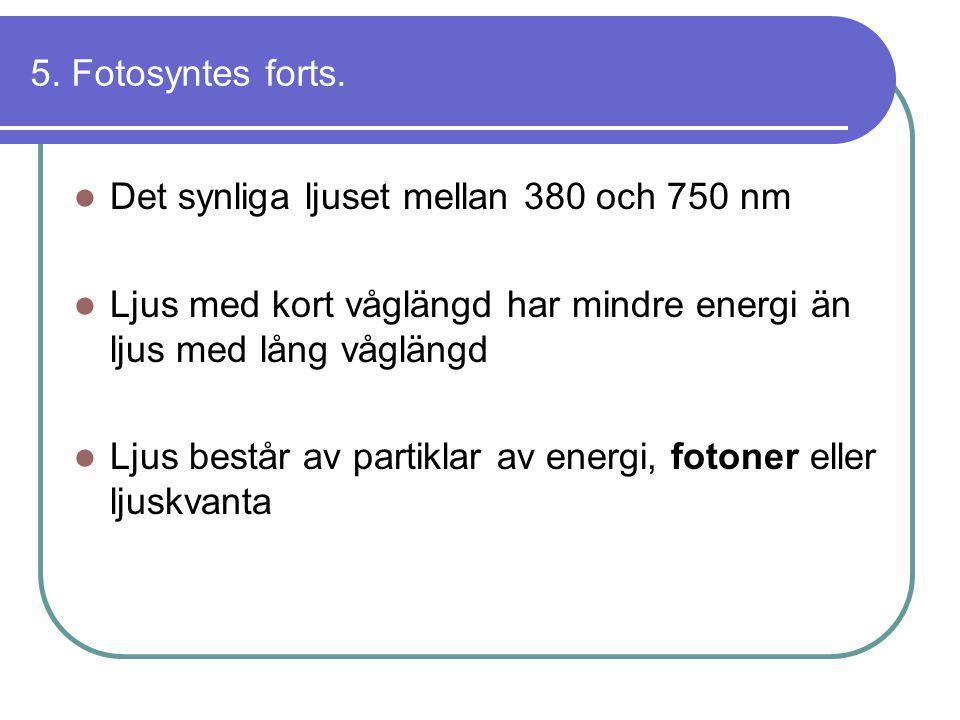 5. Fotosyntes forts. Det synliga ljuset mellan 380 och 750 nm. Ljus med kort våglängd har mindre energi än ljus med lång våglängd.