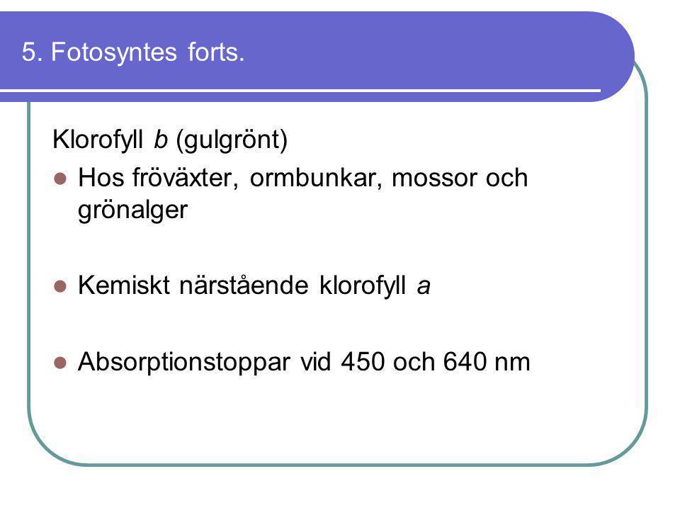 5. Fotosyntes forts. Klorofyll b (gulgrönt) Hos fröväxter, ormbunkar, mossor och grönalger. Kemiskt närstående klorofyll a.