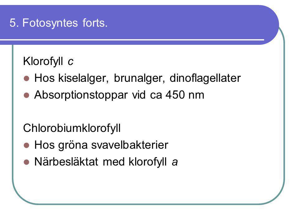 5. Fotosyntes forts. Klorofyll c. Hos kiselalger, brunalger, dinoflagellater. Absorptionstoppar vid ca 450 nm.