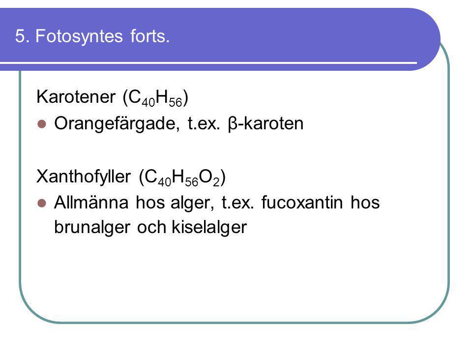 5. Fotosyntes forts. Karotener (C40H56) Orangefärgade, t.ex. β-karoten. Xanthofyller (C40H56O2)