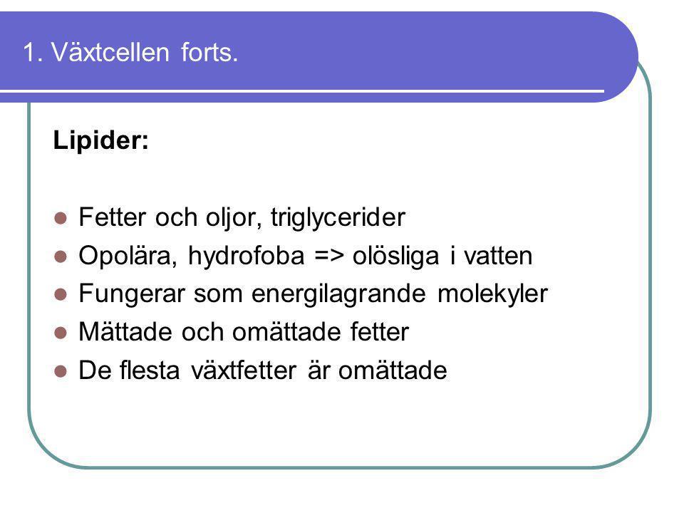 1. Växtcellen forts. Lipider: Fetter och oljor, triglycerider. Opolära, hydrofoba => olösliga i vatten.