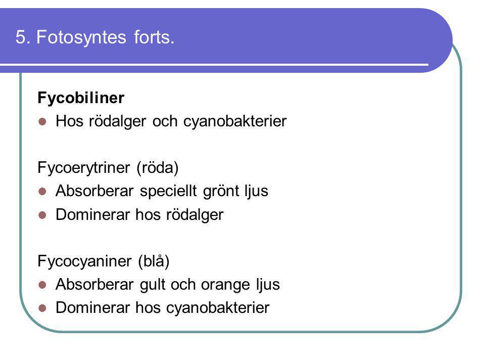 5. Fotosyntes forts. Fycobiliner Hos rödalger och cyanobakterier