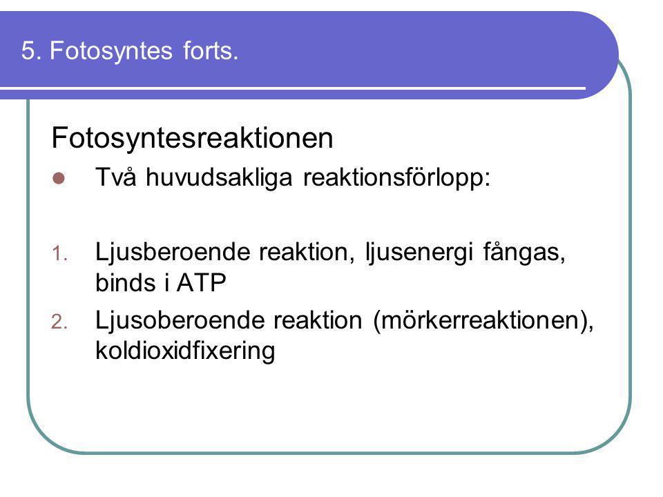 Fotosyntesreaktionen