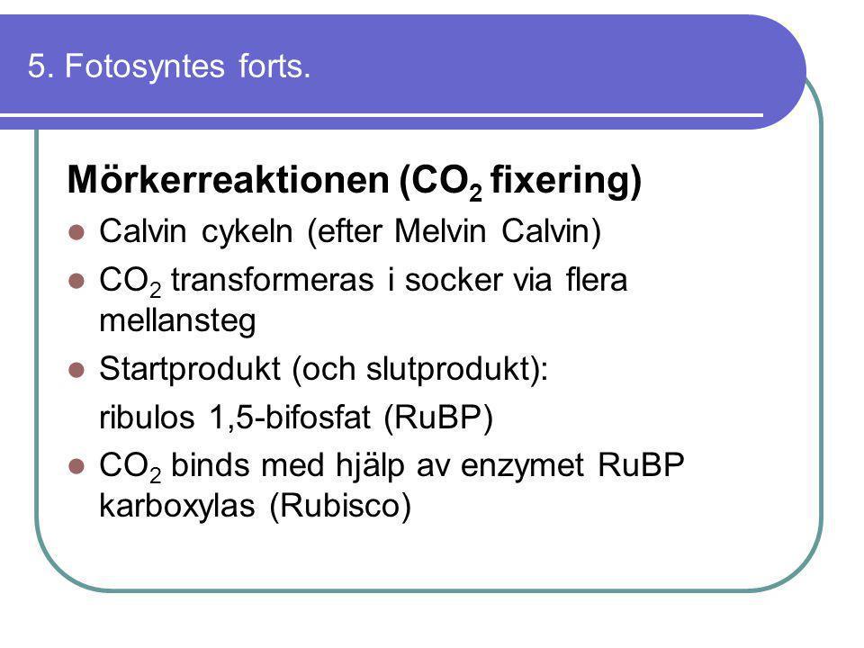 Mörkerreaktionen (CO2 fixering)