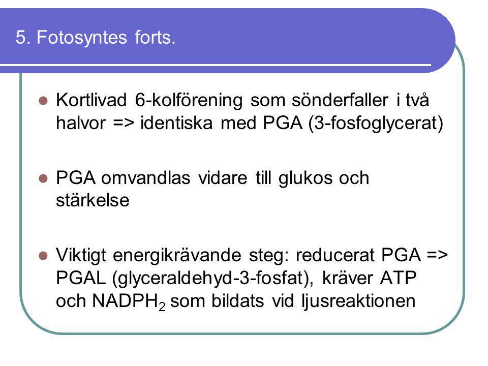 5. Fotosyntes forts. Kortlivad 6-kolförening som sönderfaller i två halvor => identiska med PGA (3-fosfoglycerat)