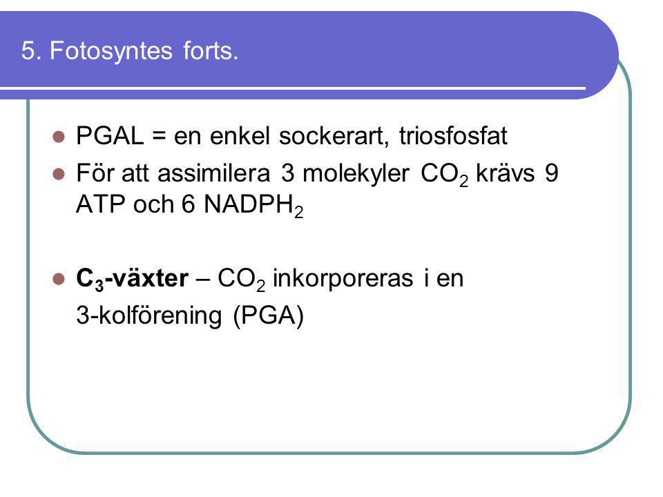 5. Fotosyntes forts. PGAL = en enkel sockerart, triosfosfat. För att assimilera 3 molekyler CO2 krävs 9 ATP och 6 NADPH2.