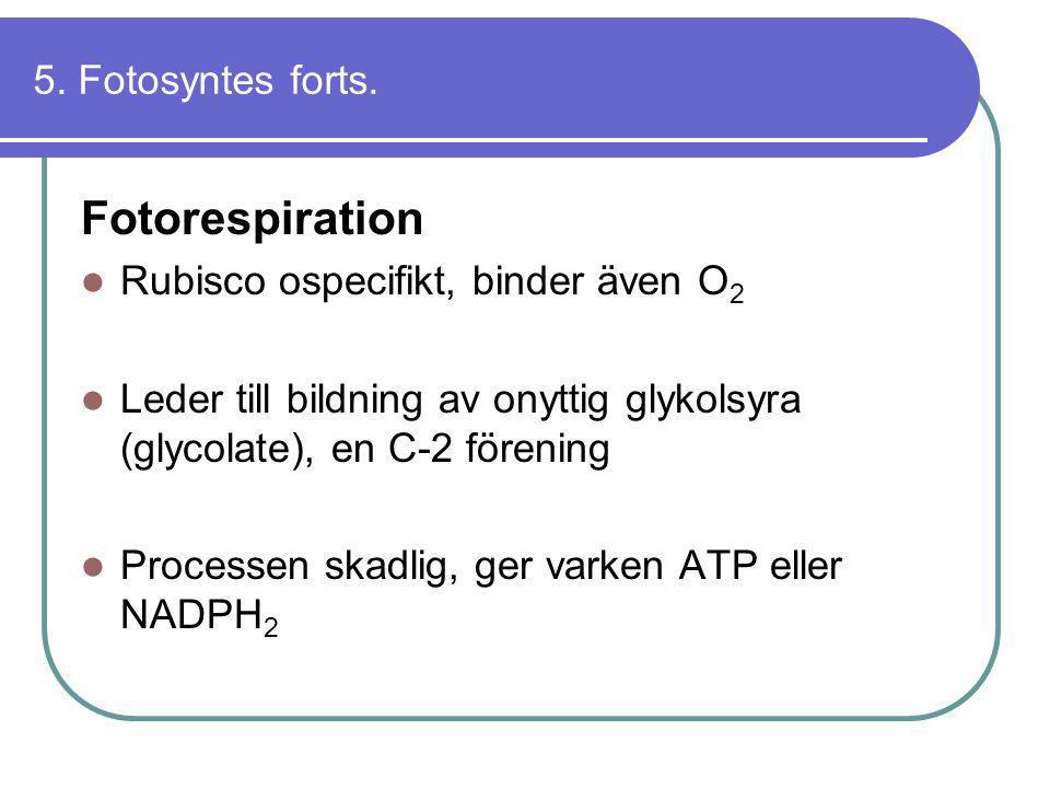 Fotorespiration 5. Fotosyntes forts.