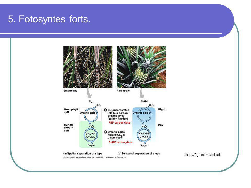 5. Fotosyntes forts. http://fig.cox.miami.edu