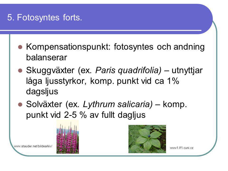 Kompensationspunkt: fotosyntes och andning balanserar