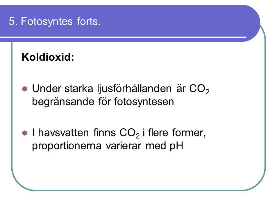 5. Fotosyntes forts. Koldioxid: Under starka ljusförhållanden är CO2 begränsande för fotosyntesen.