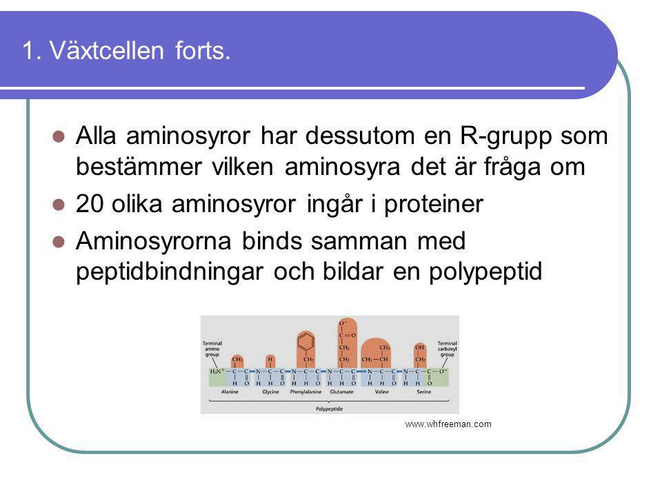 20 olika aminosyror ingår i proteiner