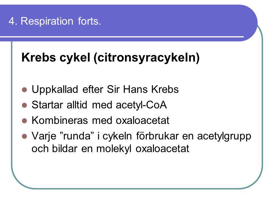 Krebs cykel (citronsyracykeln)