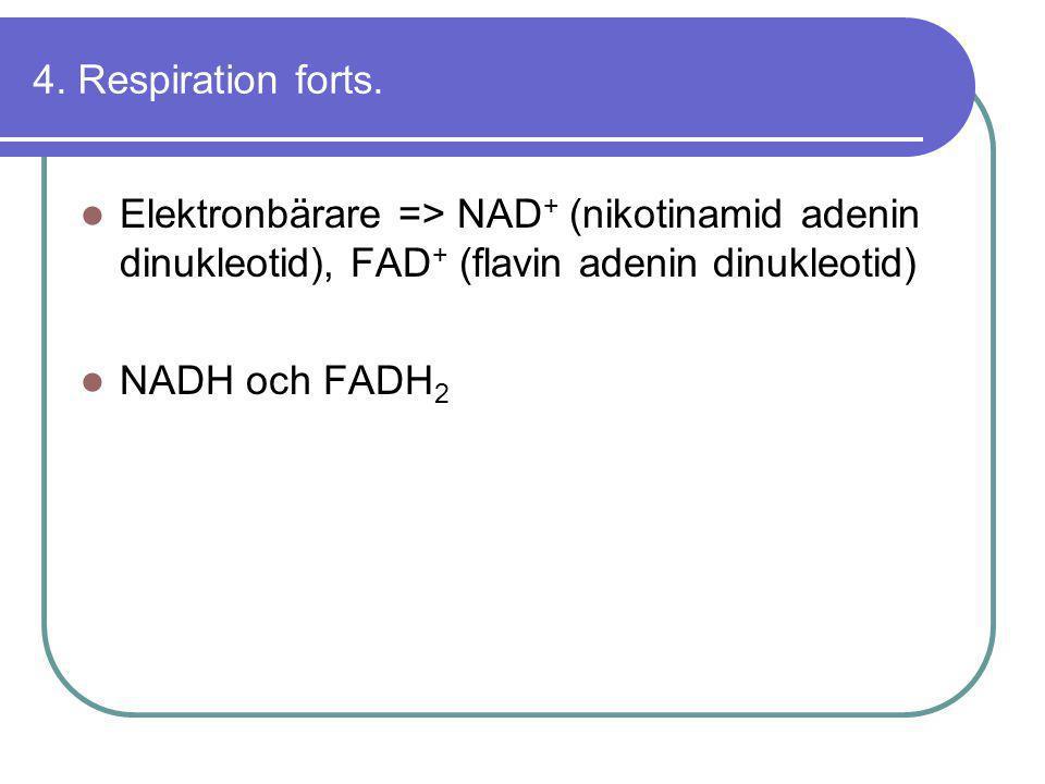 4. Respiration forts. Elektronbärare => NAD+ (nikotinamid adenin dinukleotid), FAD+ (flavin adenin dinukleotid)