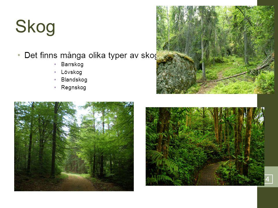 Skog Det finns många olika typer av skog: 4 Barrskog Lövskog Blandskog