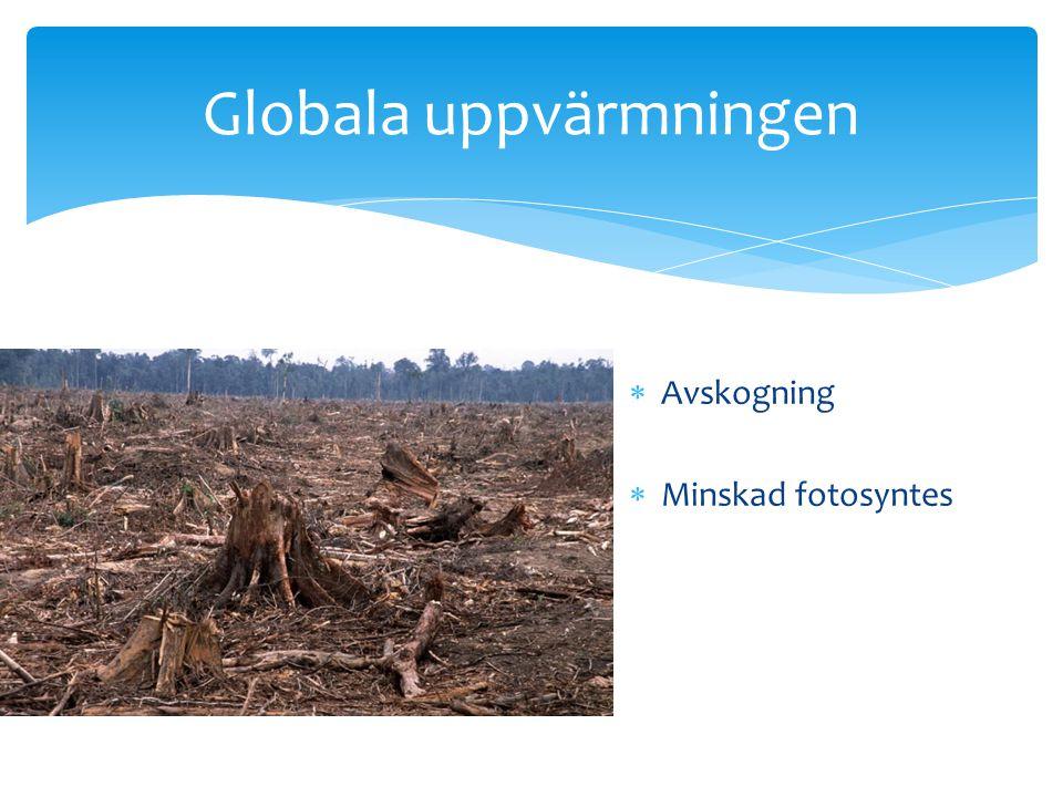 Globala uppvärmningen
