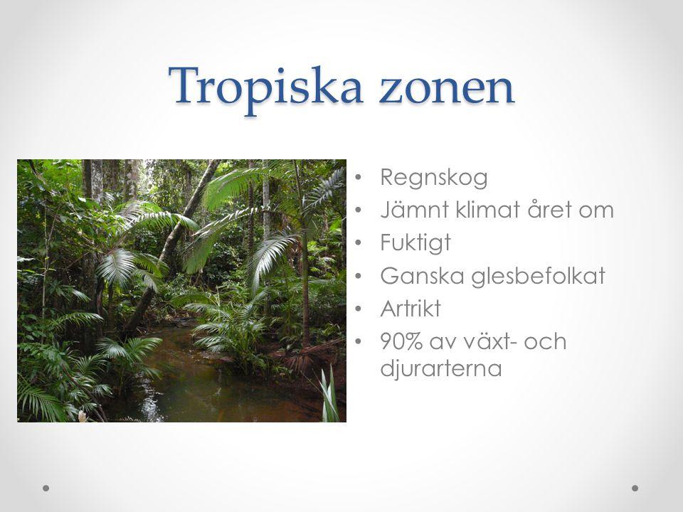 Tropiska zonen Regnskog Jämnt klimat året om Fuktigt