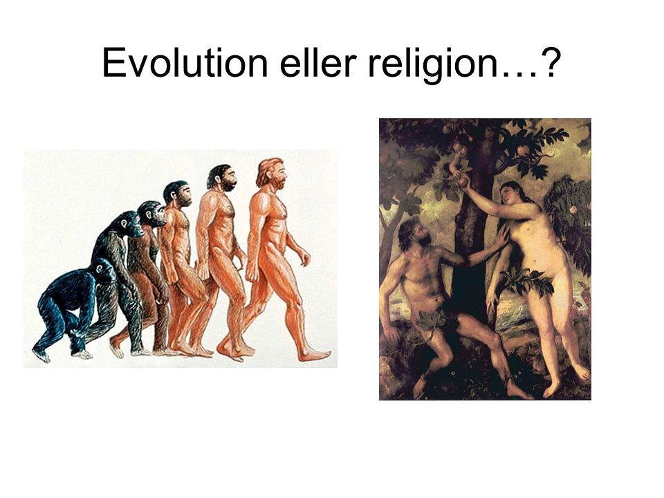 Evolution eller religion…