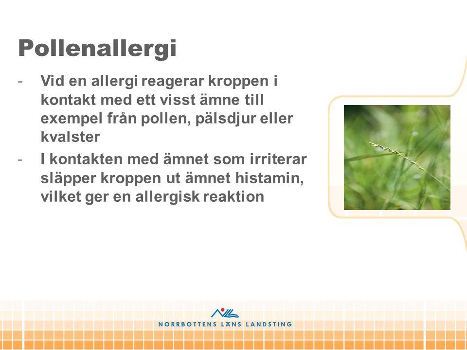 Pollenallergi Vid en allergi reagerar kroppen i kontakt med ett visst ämne till exempel från pollen, pälsdjur eller kvalster.