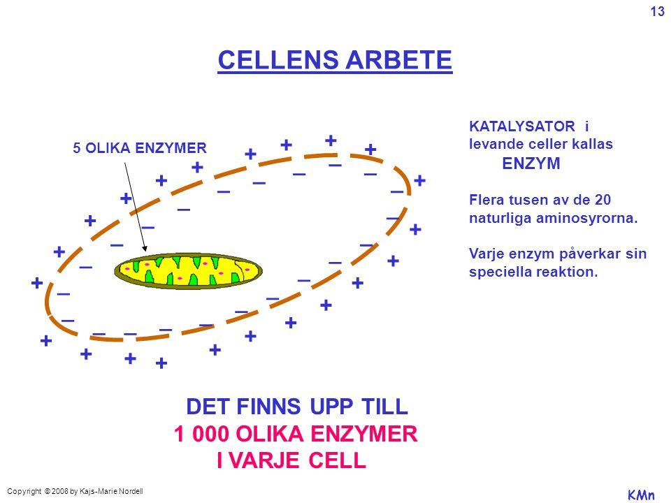 CELLENS ARBETE + _ DET FINNS UPP TILL 1 000 OLIKA ENZYMER I VARJE CELL