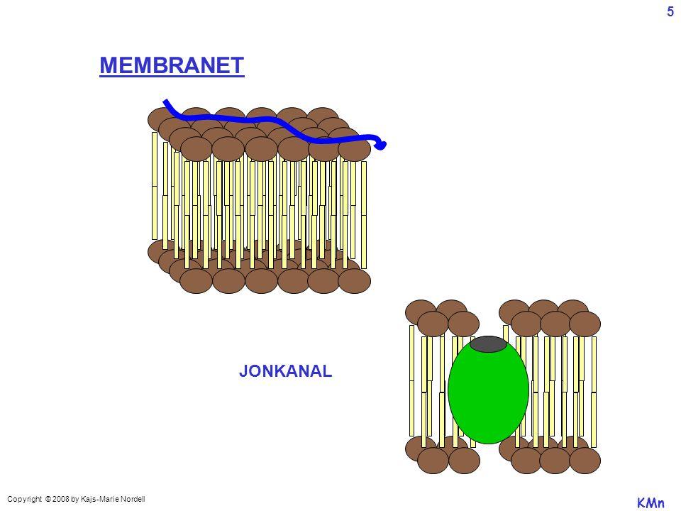5 MEMBRANET JONKANAL Copyright © 2008 by Kajs-Marie Nordell KMn