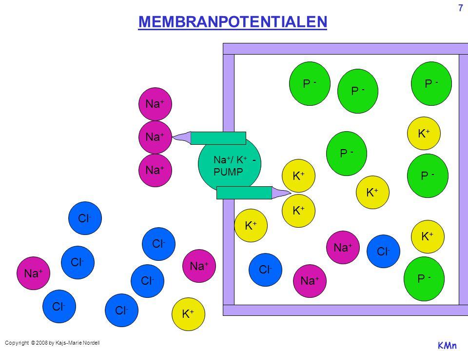 MEMBRANPOTENTIALEN P - P - P - Na+ K+ Na+ P - Na+ P - K+ K+ K+ Cl- K+