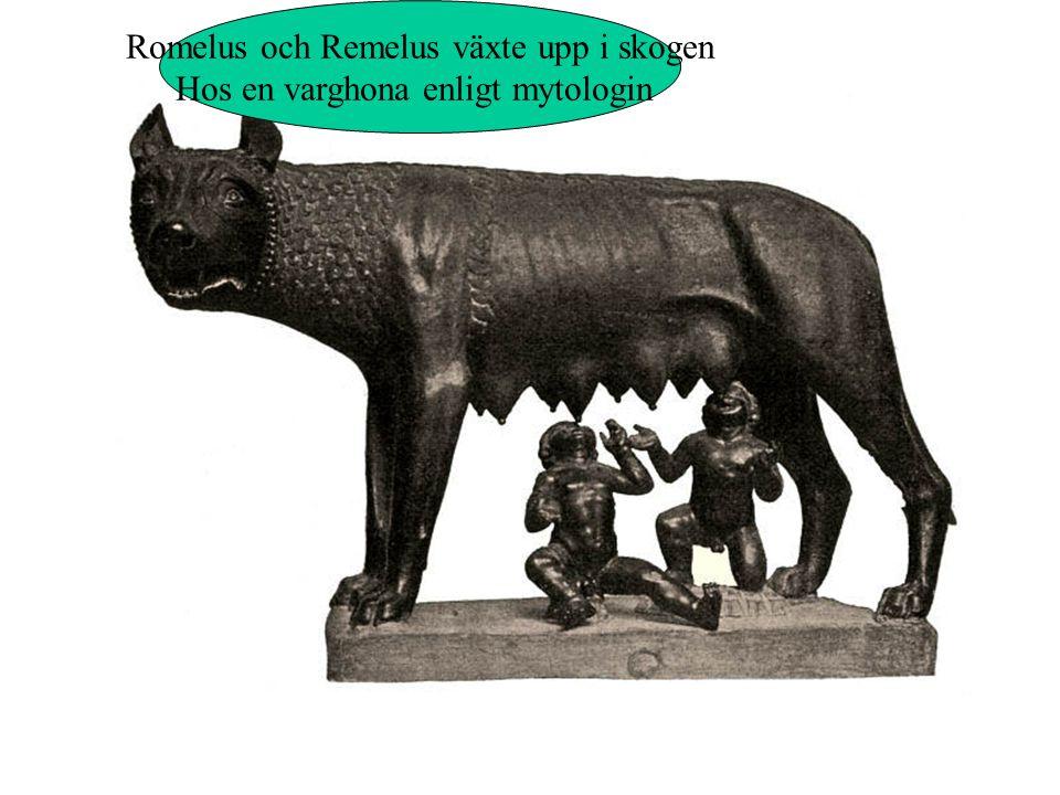 Romelus och Remelus växte upp i skogen