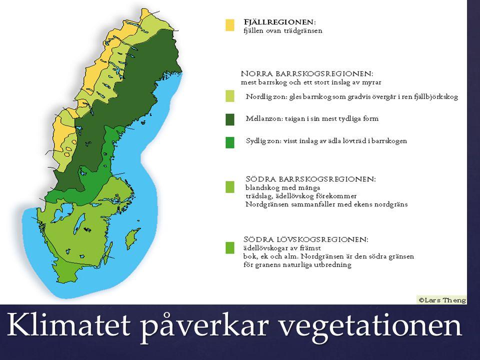Klimatet påverkar vegetationen