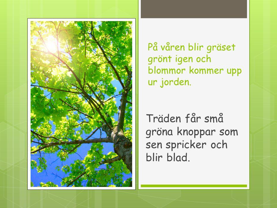 På våren blir gräset grönt igen och blommor kommer upp ur jorden.