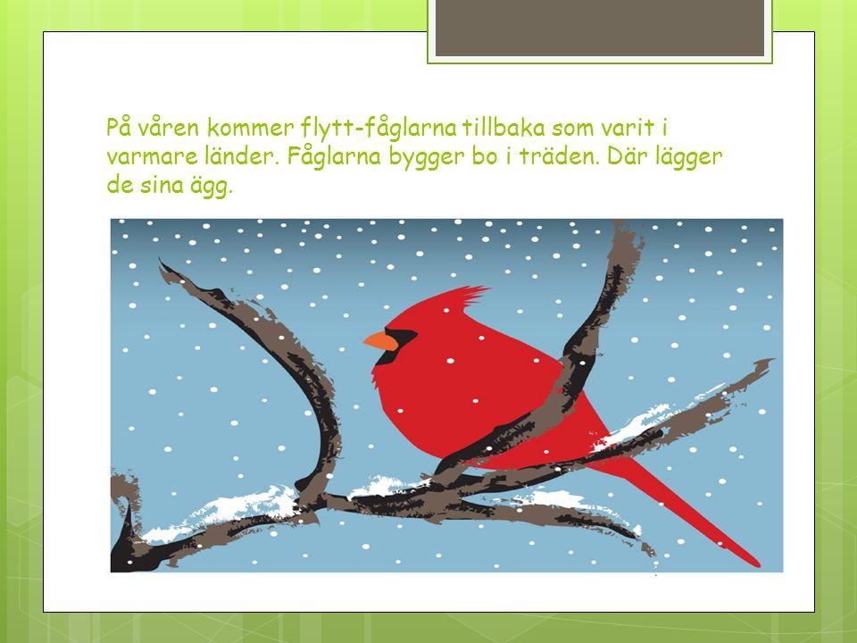 På våren kommer flytt-fåglarna tillbaka som varit i varmare länder