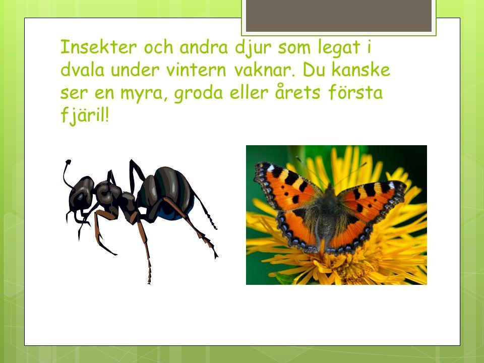 Insekter och andra djur som legat i dvala under vintern vaknar