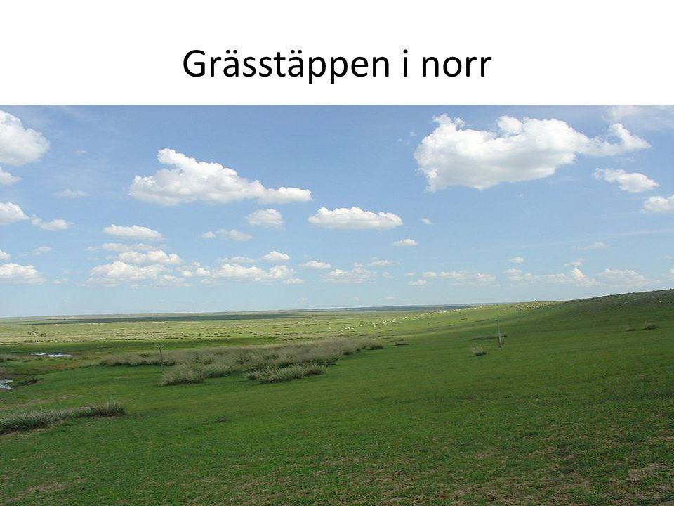 Grässtäppen i norr