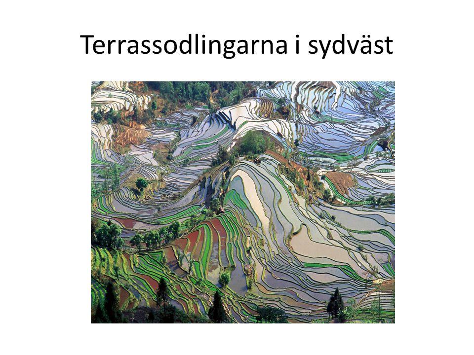 Terrassodlingarna i sydväst