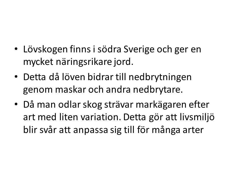 Lövskogen finns i södra Sverige och ger en mycket näringsrikare jord.