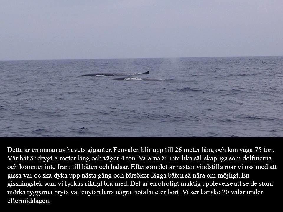 Detta är en annan av havets giganter