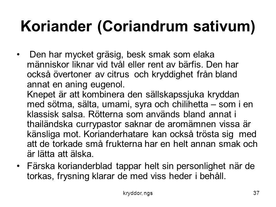 Koriander (Coriandrum sativum)