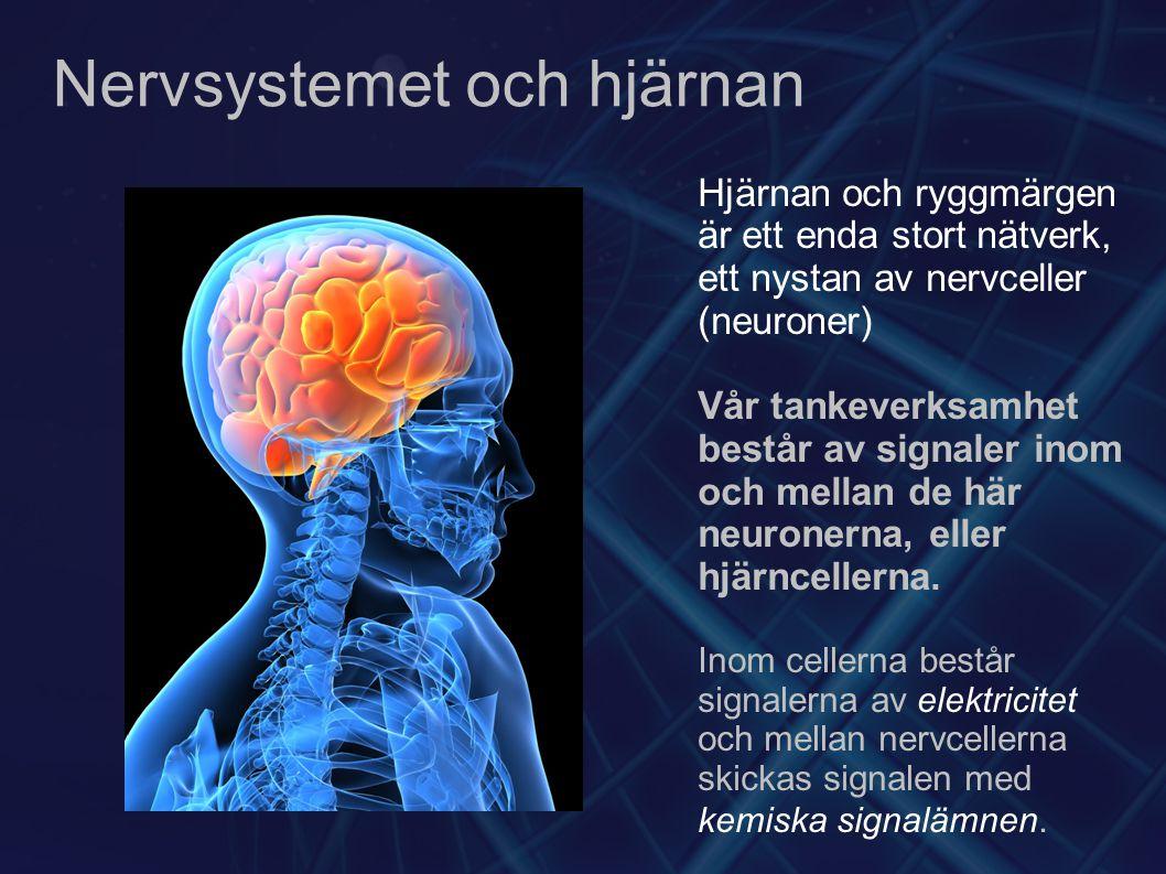 Nervsystemet och hjärnan
