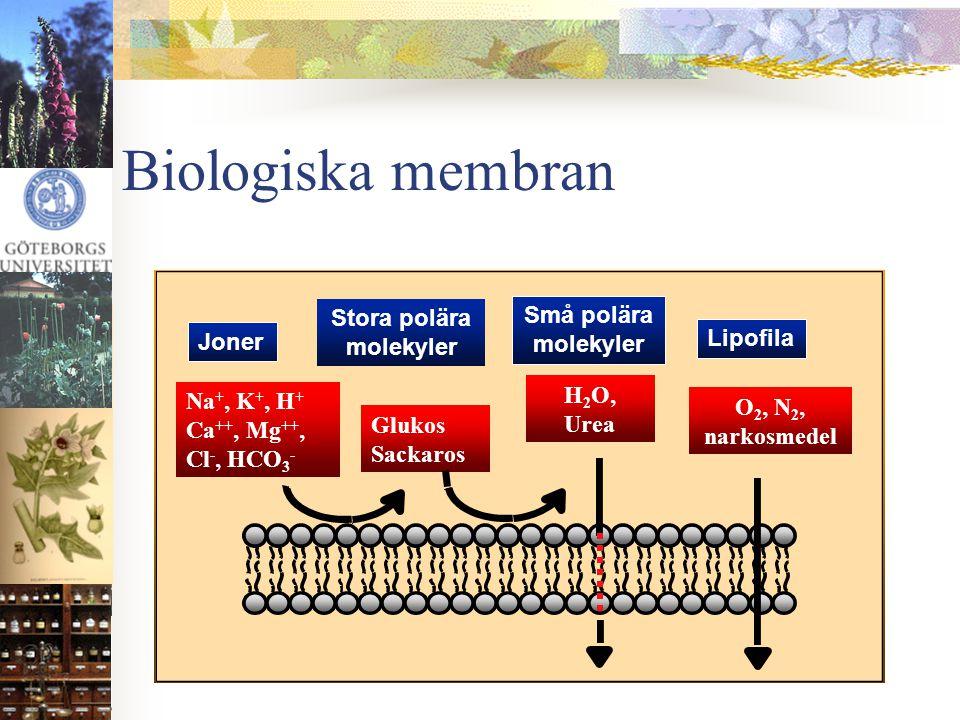 Stora polära molekyler