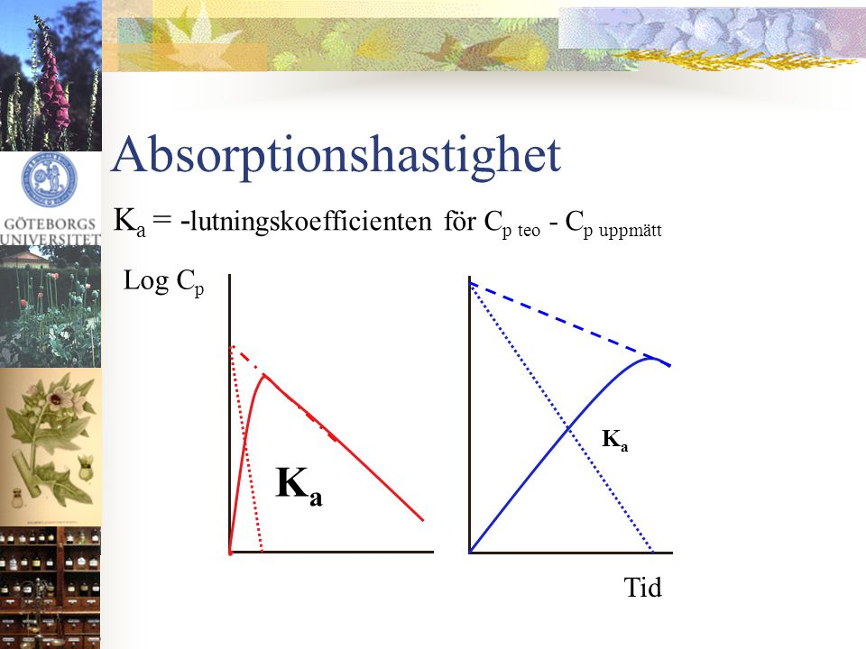 Absorptionshastighet